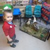 'Farm Bus' visit to Nursery and Reception